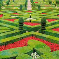 Formal ornamental hedging